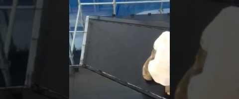 外壁塗装埼玉県白岡市新白岡より コロニアル屋根上塗り作業